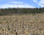 Drought in Honduras. Courtesy of CIAT