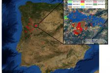 2013 fire season in Portugal will be remembered as one of the worst since 1940