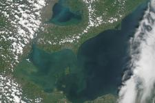 Algal bloom in the west end of Lake Erie captured by MODIS