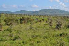 Vegetation in savannas and shrublands helps to offset global deforestation (Image: CT Cooper)