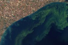 Toxic algal bloom in lake Erie (Imagine: NASA)