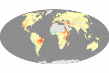 Fire seasons have become longer in areas marked with red and orange (Image: NASA)