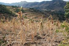 Agricultural drought in Ethiopia. Image: WFP/Stephanie Savariaud