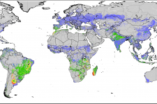 ASIS shows agricultural areas with a high likelihood of water stress (red areas) of the first ten day-period of January 2014