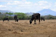 Drought is a major disaster in Latin America and the Caribbean, affecting roughly 6.6 million people 2015 (Image: CIAT).