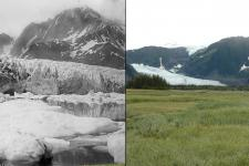Pedersen Glacier 1917 and 2005