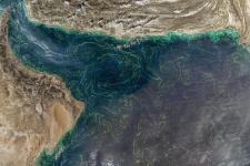 Floración de algas en el Golfo de Omán 24 de enero de 2018. Imagen: Ministerio de Cambio Climático y Medio Ambiente de los EAU