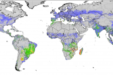 Agricultural Stress Index (FAO)